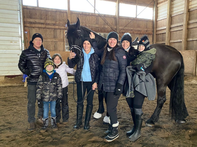Friesians for sale: Best selection of QUALITY friesian horses for